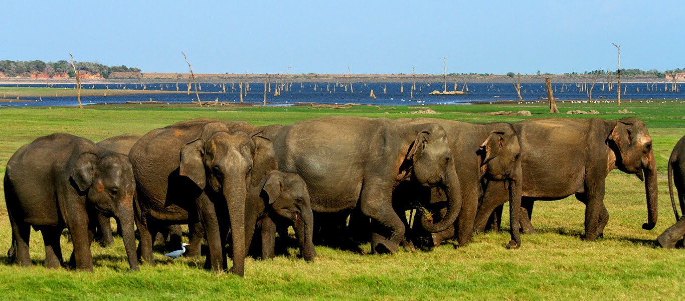 Visit Minneriya National Park Sri Lanka