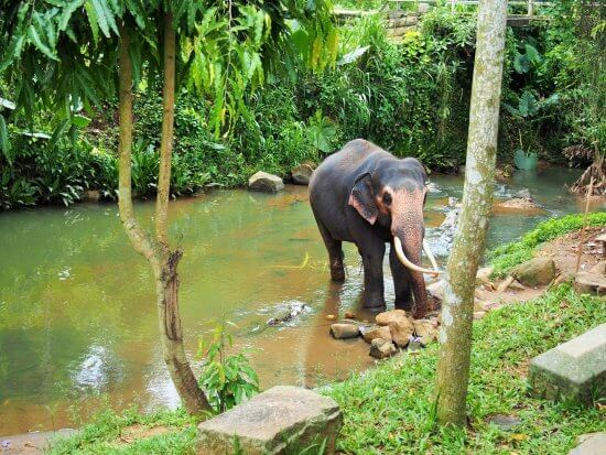 millenium-elephant-foundation-in-sri-lanka